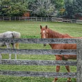 1007 - Here's Looking At You by Sheryl Sutter