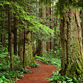 Heritage Forest 2 by Randy Hall
