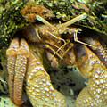 Hermit Crab by Wendy Fox