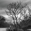 Hermit Island Tree 0912 by Guy Whiteley