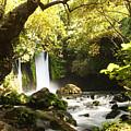 Hermon Stream Nature Reserve Banias by Alon Meir