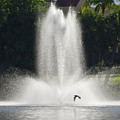 Heron Across A Fountain by William Tasker