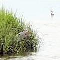 Heron And Cormorant by Al Powell Photography USA