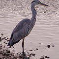 Heron And Grey Water by Adrian Wale