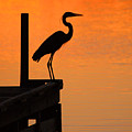 Heron At Sunset by Clayton Bruster