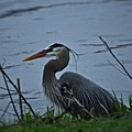 Heron At The Rock River by Laura Birr Brown