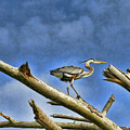 Heron At The Top Of The World  by Ola Allen