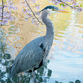 Heron - Beacon Hill Park by Michael Wheatley