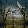 Heron By Moon Glow  by Andrea Kollo
