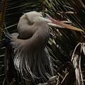 Heron Close-up by Barbara Wallace