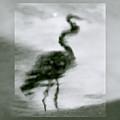 Heron De Nacht by Linda McRae