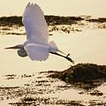 Heron Fly-by by Joe Geraci