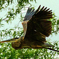 Heron Gone by Jeff Kurtz