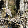 Heron In Everglades by Bonita Barlow