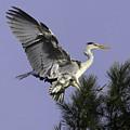 Heron In Fern Tree by Gary Hancock