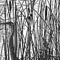 Heron In The Grass In Bw by Jennifer Robin