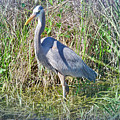 Heron In The Wetlands by Judy Kay