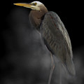 Heron On A Foggy Morning by Jenny Gandert