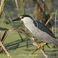 Heron On A Stick by Mike Fitzgerald