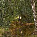 Heron On Path #g7 by Leif Sohlman