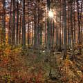 Heron Pond Cypress Trees by Steve Gadomski