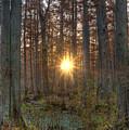 Heron Pond Sunrise by Steve Gadomski