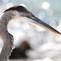 Heron Searching by Jim Clark
