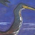 Heron by Stu Hanson
