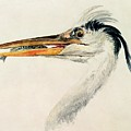 Heron With A Fish by Joseph Mallord William Turner