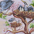 Herons At Nests by Dawn Senior-Trask
