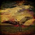 Herons by Chris Lord