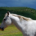Hero's Horse-colorful Background by Bruce Chevillat