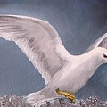 Herring Gull by Barbara Harper