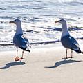 Herring Gulls On The Beach by Susie Peek