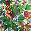 Hi-bush Cranberries by Joanne Smoley