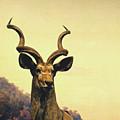 Hi, I Am Kudu by Zena Zero