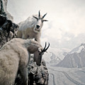 Hi We Are The Mountain Goats by Zena Zero