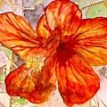 Hibiscus 2 by Derek Mccrea