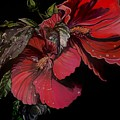 Hibiscus After The Rain by Stephanie Come-Ryker