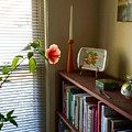 Hibiscus And Friends by Susan Wyman