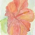 Hibiscus by Anita Wann