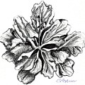 Hibiscus Bloom by Carol Allen Anfinsen