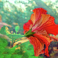 Hibiscus Flame by Kay Brewer