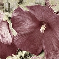 Hibiscus Floral Series  by Bobbee Rickard