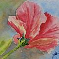 Hibiscus by Gretchen Bjornson