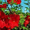 Hibiscus In Naptown by Beth Deitrick