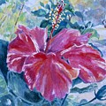 Hibiscus by Jan Bennicoff