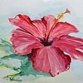 Hibiscus  by Katrina Case