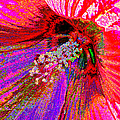 Hibiscus Macro Abstract by J M Farris Photography