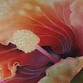 Hibiscus Macro by Susan Jenkins
